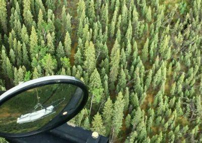 Slinging Trees